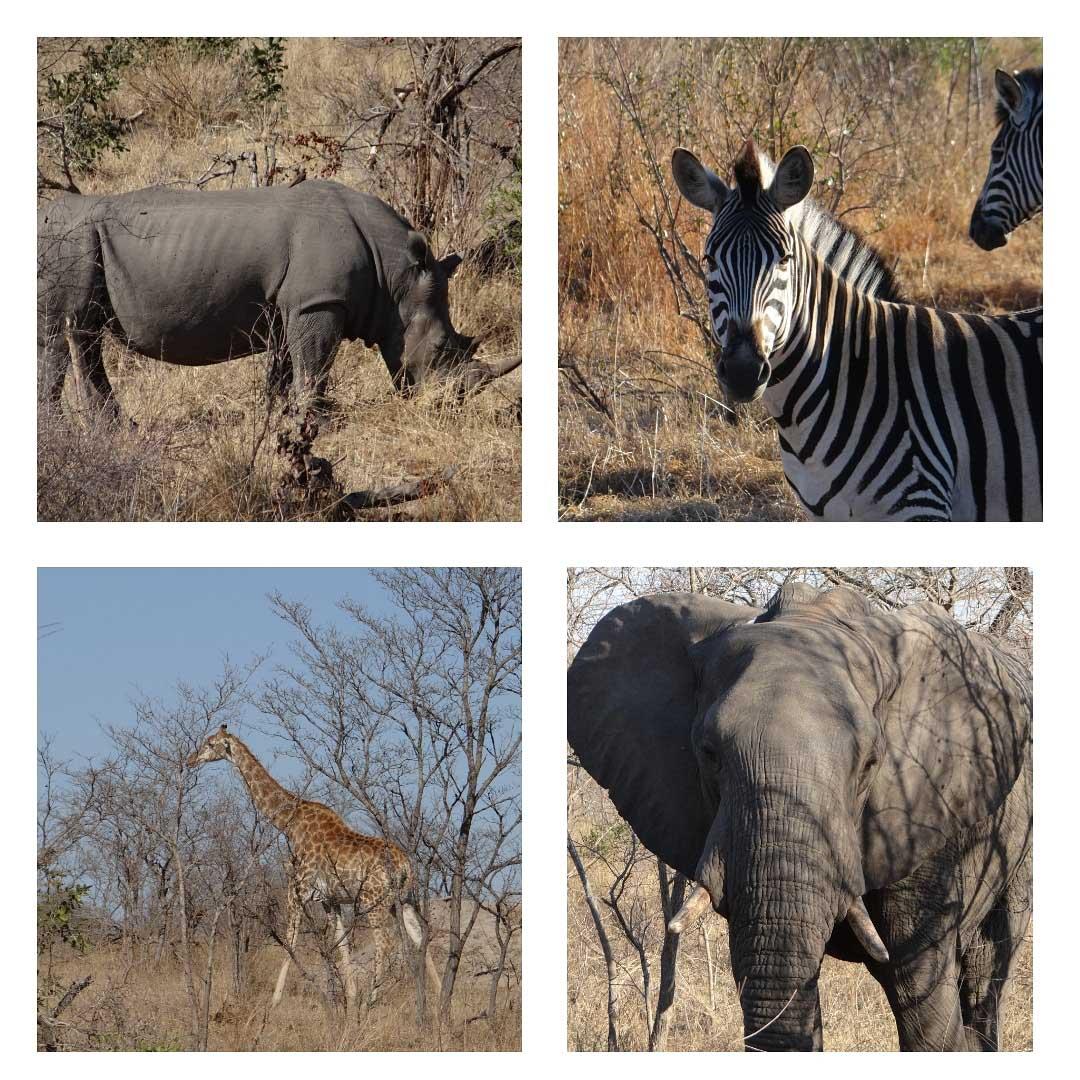 Animals in Kruger National Park.